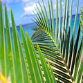 Green Palm Leaves by Dana Edmunds - Printscapes