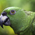 Green Parrot by Marie Elise Mathieu