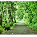 Green Path by J D Banks