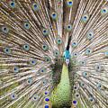 Green Peacock by Andi Heryono