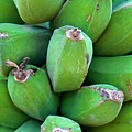 Green Platanos by Roam  Images