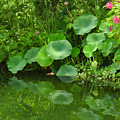 Green Reflection by Ann Keisling