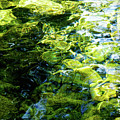 Green Reflection by Tim Dussault