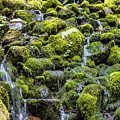 Green Rocks And Water by John McGraw