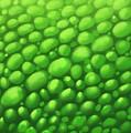 Green Scales by Derek Donnelly