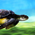 Green Sea Turtle 2 by Marilyn Hunt
