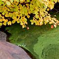 Green Slime by Andrea Simon