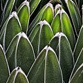 Green Spines by Alice Gipson