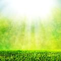 Green Spring Grass Against Natural Nature Blur by Michal Bednarek