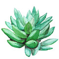 Green Succulent  by Color Color
