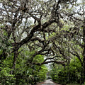 Green Swamp Oak Bower by Norman Johnson