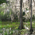 Green Swamp by Peg Urban