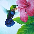 Green-throated Carib And Pink Hibiscus by Christopher Cox