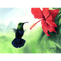 Green-throated Carib Hummingbird And Red Hibiscus by Christopher Cox