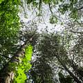 Green To The Sky by Deborah Moran