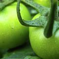 Green Tomatoes No.3