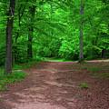 Green Trail by Josh-Mark Robinson