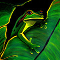 Green Tree Frog And Leaf by Nick Gustafson