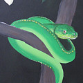 Green Tree Python by Joanne Seath