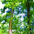 Green Trees 1 by Jeelan Clark