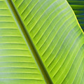 Green Tropical Leaves by Joe Carini - Printscapes