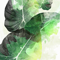 Green Tropical by Mark Ashkenazi