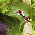 Green Turaco Portrait 2 by Bob Slitzan