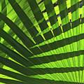 Green Weaver by Pamela Kerti