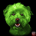 Green West Highland Terrier Mix - 8674 - Bb by James Ahn