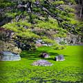 Green Winter by Eena Bo