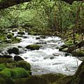 Greenbrier River Scene 2 by Nancy Mueller