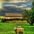 Greener Pastures by Douglas Barnard