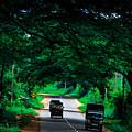 Greenery by Nadir Khan