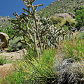 Greening Of The High Desert by Ron Cline