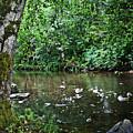 Greenwood Creek by Michelle Williamson