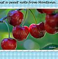 Greeting Card - Cherries #1 by Jerrie Bullock