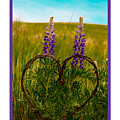 Greeting Card - Lupine Love by Jerrie Bullock