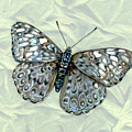 Grey Cracker Butterfly by Mindy Lighthipe