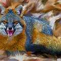 Grey Fox Smiling Artistic by Dan Friend