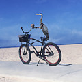 Grey Heron On Bicycle by Bette Levine