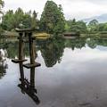Grey Heron On Lake Kinrin by Aaron Choi