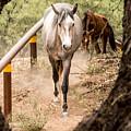 Grey Horse by Sandy Klewicki