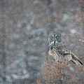 Grey In Snow by Robert L Moffat