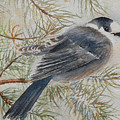 Grey Jay by Ruth Kamenev