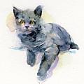 Grey Kitten by John Keeling