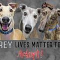 Grey Lives Matter Too Adopt by Elaine Plesser