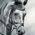 Grey by Paul Archer