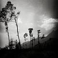Grey Skies by Angel Ciesniarska