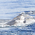 Grey Whale 2 by Shoal Hollingsworth
