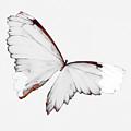 Grey Wings by Heather Joyce Morrill